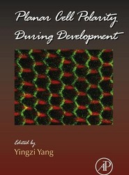 Planar Cell Polarity During Development