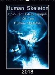 Human Skeleton 2018