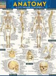 Anatomy Easel Book