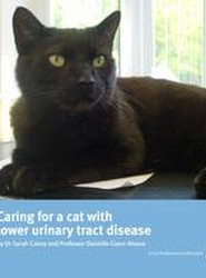 Caring for a Cat with Lower Urinary Tract Disease