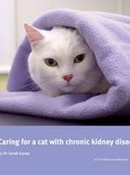 Caring for a Cat with Chronic Kidney Disease
