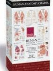 Human Anatomy Charts - 48 Chart Merchandiser