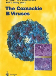 The Coxsackie B Viruses