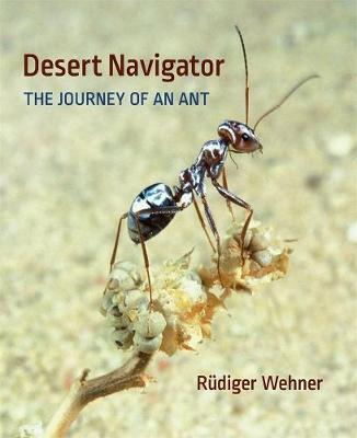 Desert Navigator