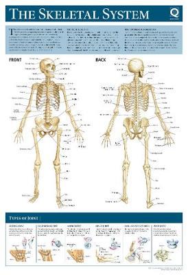 Human Anatomy Wallchart