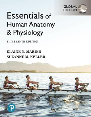 Essentials of Human Anatomy & Physiology [Global Edition]